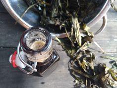 Domácí jitrocelový sirup - to nejlepší na světě proti kašli | Home-Made.Cz
