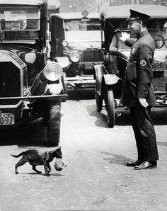 It was a sunny summer afternoon, July 29, 1925. Harry Warnecke, a photographer for the New York News, got a phone tip that a cat trying to carry its kittens home was tying up traffic because a policeman had stopped the cars on a busy street (Centre Street) to allow it to cross.
