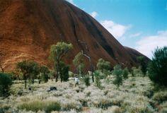 De navel van de wereld – Passionate Nomads: buffelgras aan de voet van Uluru. Deze grassoort is in de jaren '50 in Australië geïntroduceerd en wordt hier weer verwijderd. Het overwoekert het endemisch gewas.