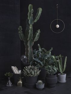 If anyone knows a good/reliable website that sells large cactus plants, comment below please, thank you!!!