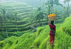 A woman in traditional clothing carries a basket of flowers along rice terraces in Ubud, Bali, Indonesia. Ubud is a town on the Indonesian island of Bali. Lombok, Jakarta, Yoga Teacher Training Bali, Ubud Bali, Ubud Indonesia, Photo Humour, Vietnam, Voyage Bali, One Day Tour