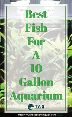 Best fish for a 10 gallon aquarium. If you have a small 10 gallon aquarium tank. Best fish for a 10 gallon aquarium. If you have a small 10 gallon aquarium tank, here are a list of fishes that are suitable for you to get for the setup. Tropical Freshwater Fish, Tropical Fish Tanks, Freshwater Aquarium Fish, Aquarium Setup, Nano Aquarium, Nature Aquarium, Community Fish Tank, 10 Gallon Fish Tank, Small Fish Tanks