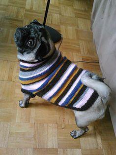 Pug sweater free knitting pattern