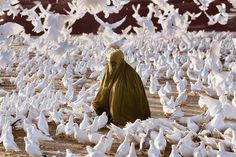 """""""Photo by @stevemccurryofficial // Thousands of white doves at the blue mosque in Mazar-e-Sharif, Afghanistan, are a tourist attraction for Afghans, and…"""""""