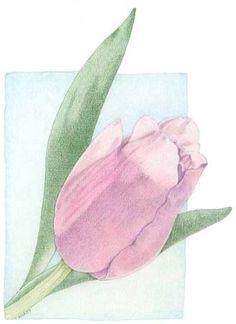 Pink Tulip * coloured pencil * Mariana Musa