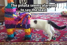 The pinata seems alarmed to say the least...