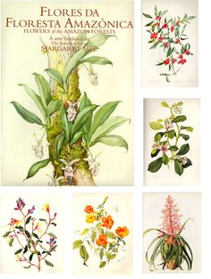 I absolutely love Margaret Mee's illustrations. For those of you who like old fashioned botanical drawings...