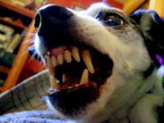 Food Aggression In Dogs And What You Need To Know