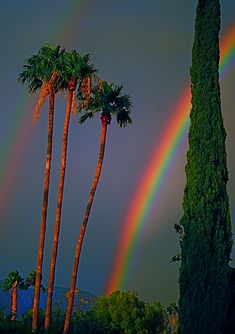 Beautiful rainbow amongst the palm trees, Monsoon season --- Tucson, Arizona. Rainbow Sky, Love Rainbow, Over The Rainbow, Beautiful World, Beautiful Places, Beautiful Pictures, All Nature, Amazing Nature, Somewhere Over
