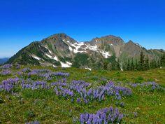 ProTrails | Appleton Pass, Sol Duc Trailhead, Olympic National Park, Washington