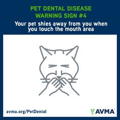 Does your pet shy away from you when you touch the mouth area? It could be a sign of a serious problem. For more information about pet dental health and the importance of preventive care, visit avma.org/PetDental