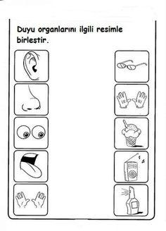 Okul Bahçesi: Duyu Organlarımız * Boyama