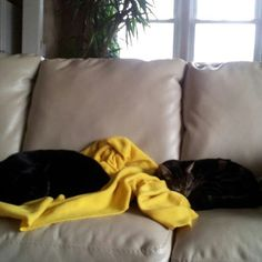 Beautiful Onyx & Mick: The Great Canadian Subscription Box List Subscription Boxes, I Love Dogs, Bean Bag Chair, Beautiful, Bean Bag Chairs, Bean Bags, Beanbag Chair