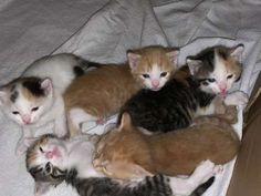 Kitten zu vergeben - Hauskatze, Bauernhofkatze Baby, Animals, Adorable Kittens, Gatos, Forgiveness, Cats, Animales, Animaux, Animal