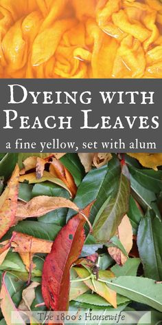 It is possible to obtain a fine yellow dye from peach leaves. Shared here is the method that I use. Fabric Painting, Fabric Art, Natural Dye Fabric, Natural Dyeing, How To Dye Fabric, Dyeing Fabric, Dyeing Yarn, Fabric Dyeing Techniques, Earth Pigments