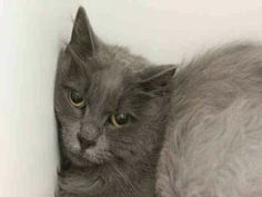 ***UNKNOWN 08/01/17***SPAYED...GENTLE...HEALTHY... 8 YEAR OLD SAMMY WAS DUMPED FOR ALLERGIES BY OWNER. SHE IS VERY UPSET AND WILL NEED A HOME TO DECOMPRESS. SHE NEEDS SOME GROOMING AND TLC.