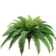 One 25 Inch Long Silk Artificial Boston Fern Bush 40 Inch Spread Plant 48 Branches *** For more information, visit now (This is an amazon affiliate link. I may earn commission from it)
