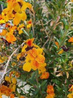 Nature, Flowers, Plants, Inspiration, Beauty, Biblical Inspiration, Naturaleza, Plant, Nature Illustration