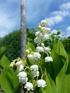 Tänk att naturen skapar sånna små under....bara blommor!