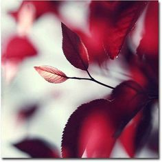 Trademark Fine Art Young 'When Spring is Red' Canvas Art by Beata Czyzowska, Size: 35 x 35, Red