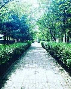#욱일아파트 #아귀찜 #배달 다녀오다가 #길 이 너무 #아름다운 것 #사동 에는 #이렇게 #시원한 #나무 가 #있다 #왕손 #왕손쌈밥 #감사합니다