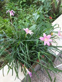 Pink beauty....