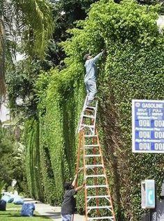~Why Women Live Longer Than Men~ ~Bushes~ ~Ladders~