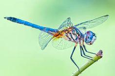 Resultado de imagen para imagenes de blue dragon
