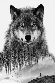 Wolves. Wild. Nature. Creation.