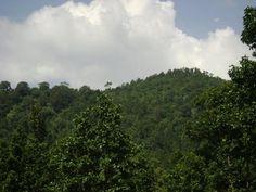 Netravali Wildlife Sanctuary - in Goa,India