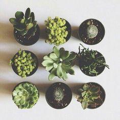 i want a succulent garden!!!!