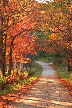 Fall colours on country road (Vermont) by enfi (autumn leaves walks) Autumn Scenes, Fall Pictures, Fall Harvest, The Great Outdoors, Autumn Leaves, Countryside, Nature Photography, Beautiful Places, Scenery