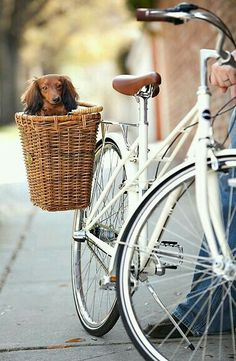 Sitting pretty on my white bike in my wicker basket of love.