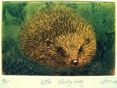 LynnBaileyPrintmaker - in Exeter, United Kingdom  This small copper plate etching of a hedgehog has been printed in a rich selection of carefully applied colours. Brown and blue green ink were rubbed into the etched grooves in the copper plate, and then a transparent blend of autumnal red and yellow ink has been rolled over the surface of the plate, to finish, a little inks has been lifted off the highlight on the hedgehogs nose.