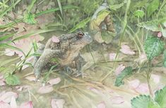 Melissa Halley Toad with Cherry Blossom Petals 2018  Watercolour, mounted paper on wood, 20 x 30 cm