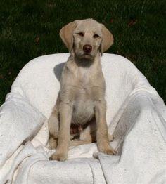 Apollo - Last Puppy Standing.