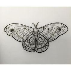 Tomorrow's piece!  #moth #linedrawing #davidmushaney #rebelmuse #linework #mothdrawing
