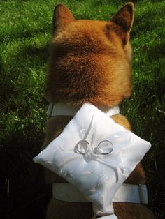 ring bearer...i want me and my boyfriend's puppy to learn how to do thissss!