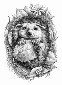You can't beat a hedgehog! Little hedgehog by ELINA CHERIANIDOU This was to… You can't beat a hedgehog! Little hedgehog. Art And Illustration, Hedgehog Illustration, 3d Illustrations, Colouring Pages, Adult Coloring Pages, Coloring Books, Coloring For Adults, Animal Drawings, Pencil Drawings