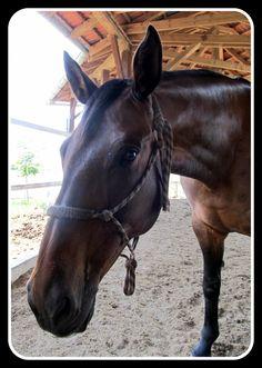 #Sisa Horses, Animals, Animales, Animaux, Animal, Animais, Horse
