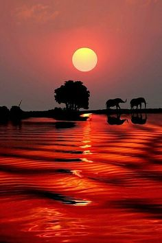 Botswana, Southern Africa sunset elephant coucher de soleil