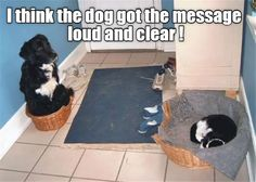 Funny Animal Pictures Of The Day – 26 Pics                                                                                                                                                                                 More