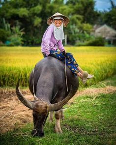 ` Man Beast, Riding Helmets, Cowboy Hats, Animals, Image, Blog, Life, Nostalgia, Animales