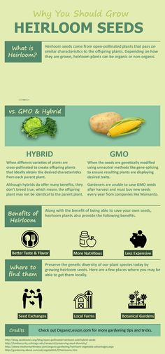 Check out this great infographic to learn about heirloom seeds and how they differ from hybrid and GMO seeds.