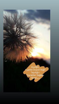 Dandelion, Islam, App, Flowers, Plants, Life, Twitter, Te Amo, Profile