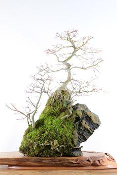 石付盆栽 bonsai on the rock • Posts Tagged '石付'