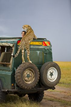 "♂ Outdoor adventure wildlife kingdom ""Closer"" by Yanai Bonneh"