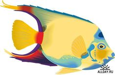 Аквариумные рыбки - векторные отрисовки