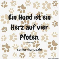 A dog is a heart on four paws - Senior-Hunde - Hund Dog Quotes, Animal Quotes, True Quotes, Cute Puppies, Dogs And Puppies, Puppy Mix, Wire Fox Terrier, Cairn Terrier, Silly Dogs