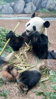 Xi Lan April 2014. #ZAFanFriday submission from Facebook user Carol K.